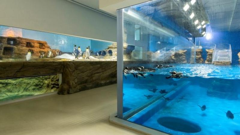 【公告】「企鵝奇遇」展區燈光調整