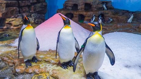 (2)給企鵝的剉冰禮物