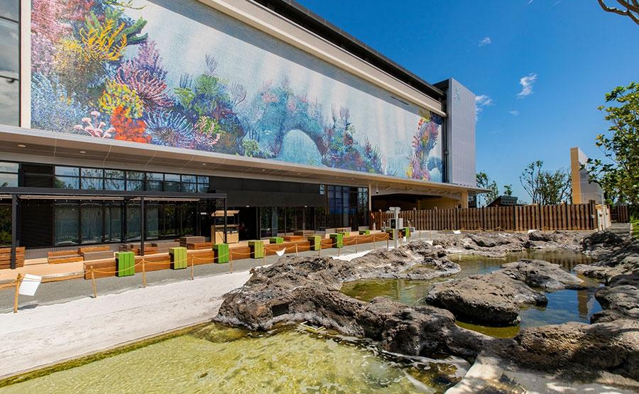 潮間戲灘 Discovery Reef